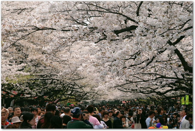上野公園の桜並木の下を歩く大勢の人々