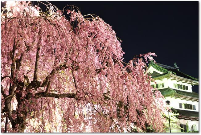 弘前城前の満開のしだれ桜の夜桜の様子