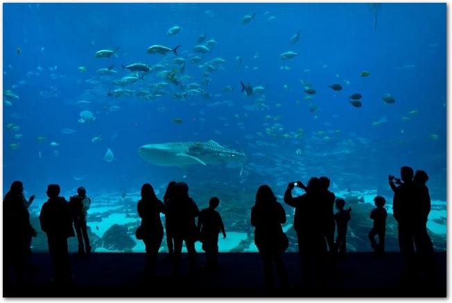 水族館の大水槽を泳ぐ魚とそれを見ている人々の後姿のシルエット